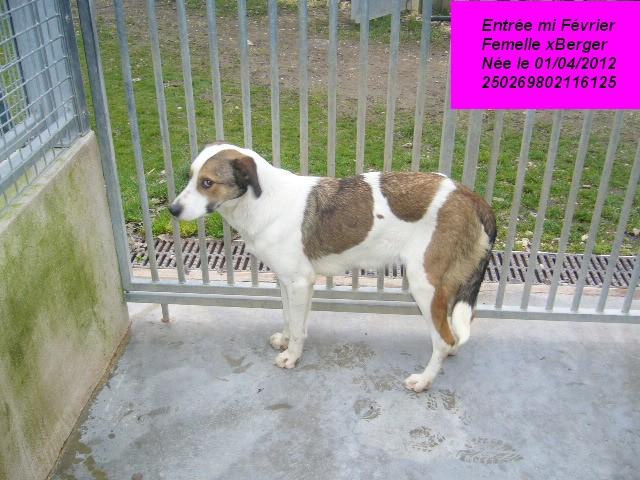 GALLIA xBerger blanche/marron 250269802116125 P1150231