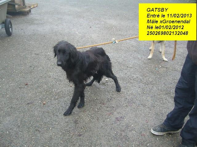 GATSBY xGroenendal 250269802132048 P1150312