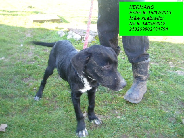 HERMANO xLabrador 250269802131794 P1150324