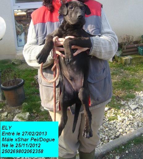 ELY xSharpei/Dogue noir 250269802062358 P1150439