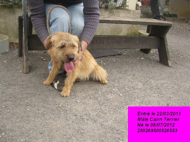 Benji Cairn Terrier 250269500526553 P1150618