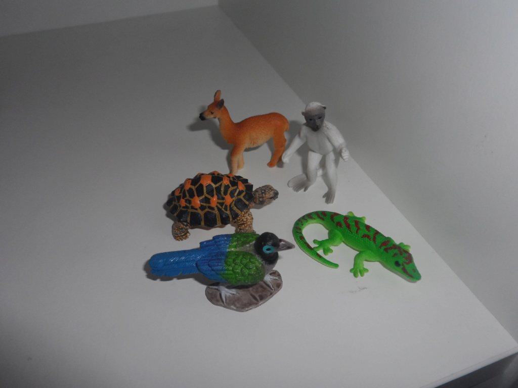 The solid Yowie-UK and US  animals in my zoo - Page 2 Sam_5423