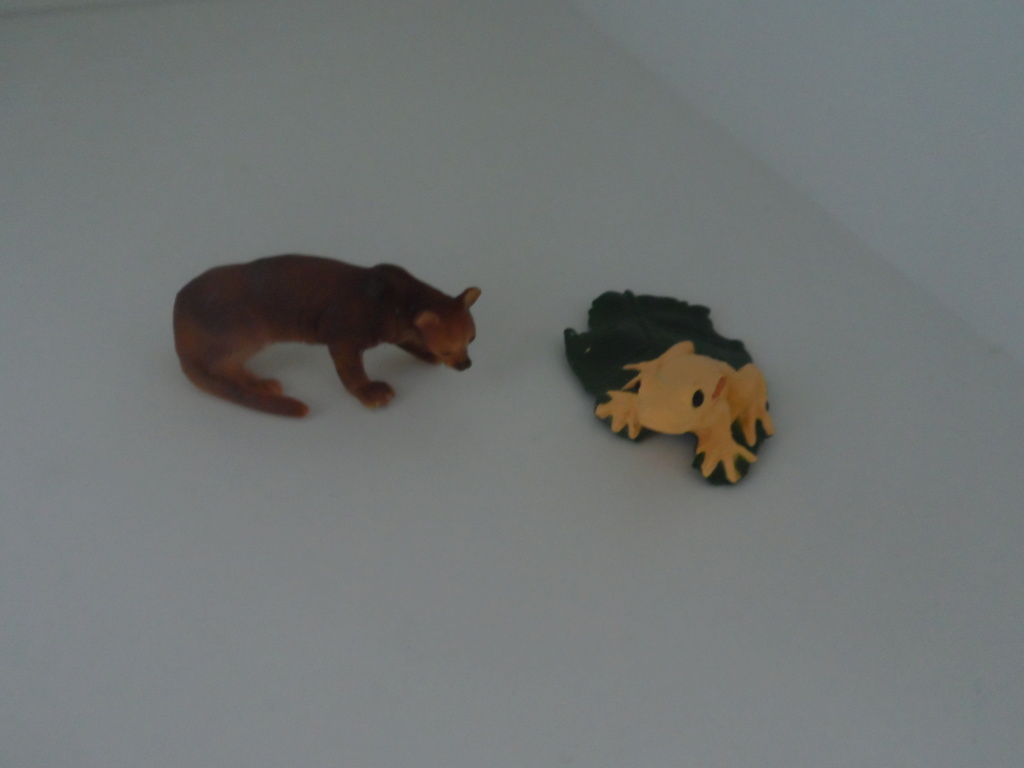 The solid Yowie-UK and US  animals in my zoo - Page 2 Sam_6215