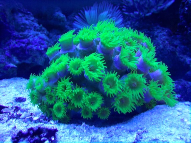 Sun Coral? P0406010