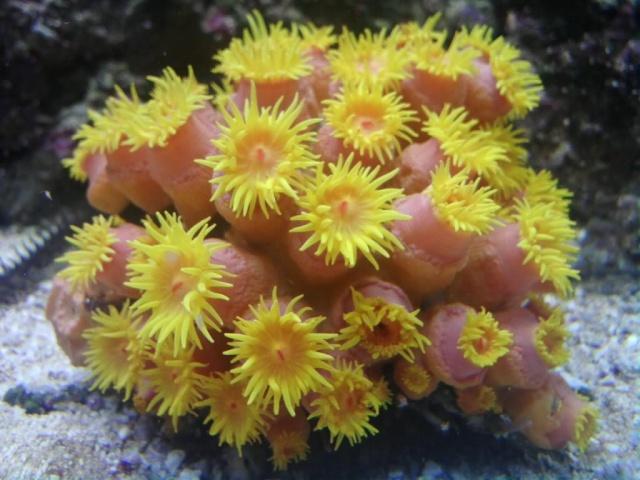 Sun Coral? P0910010