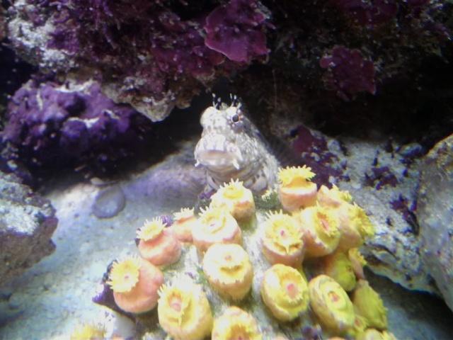 Sun Coral? P2212011