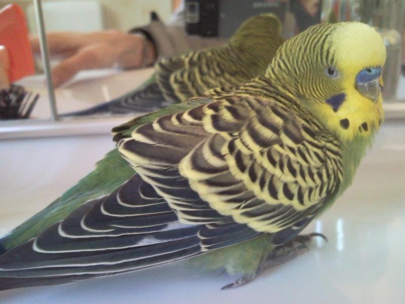 Il pappagallo è malato? Lele_010