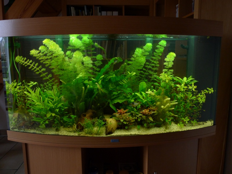 Photo de mon aquarium JUWEL vision 260 L L1000811