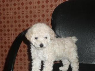 [Informe] Qué hacer ante la llegada de un nuevo cachorro al hogar 65796610