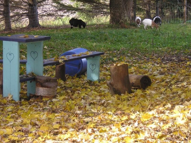 Vos installations pour Chèvre en photo ! Photo_11