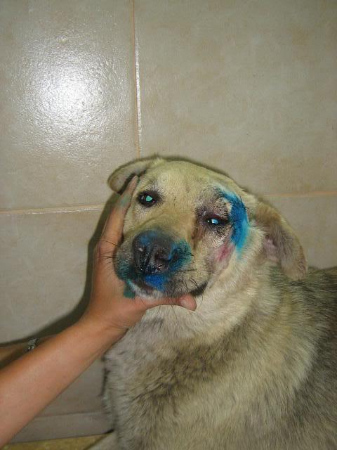 Pongo, chien des rues, né en 2009, très affectueux !! D1d77210