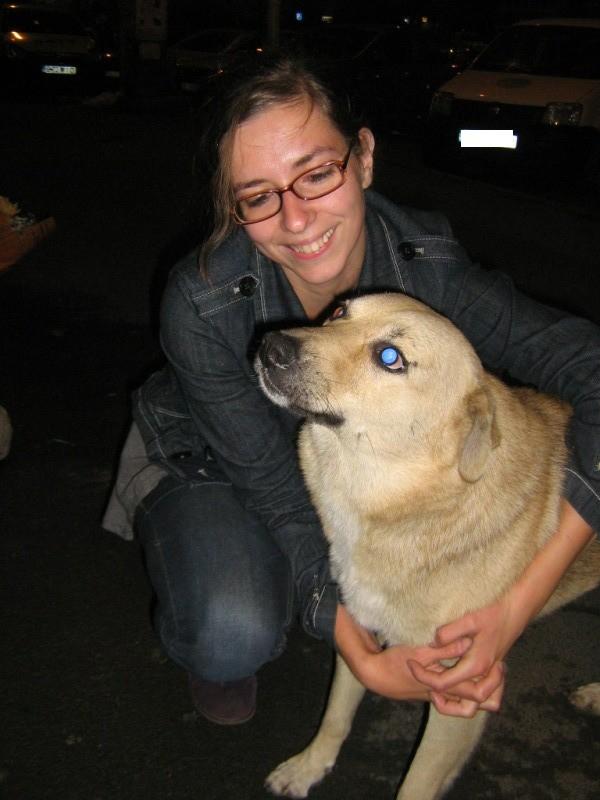 Pongo, chien des rues, né en 2009, très affectueux !! Pongo110
