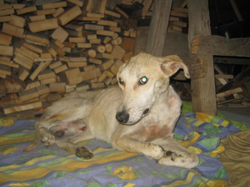 Paco, male, ne en 2012, trouve sur les champs Poze_g13