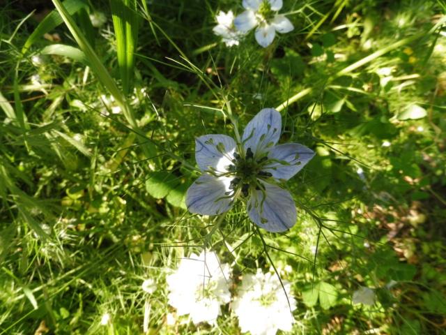 Histoire de plantes et de jardinage P1070512