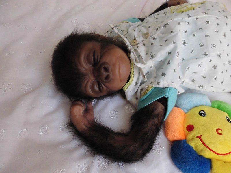Les bébés de christine - Page 4 Cimg0512