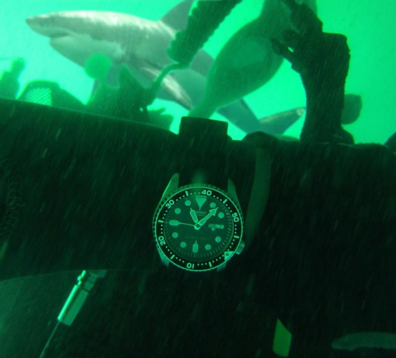 Sunday Dive: 07-04-2013 Woodman Point - Seiko SKX007 Seiko-11