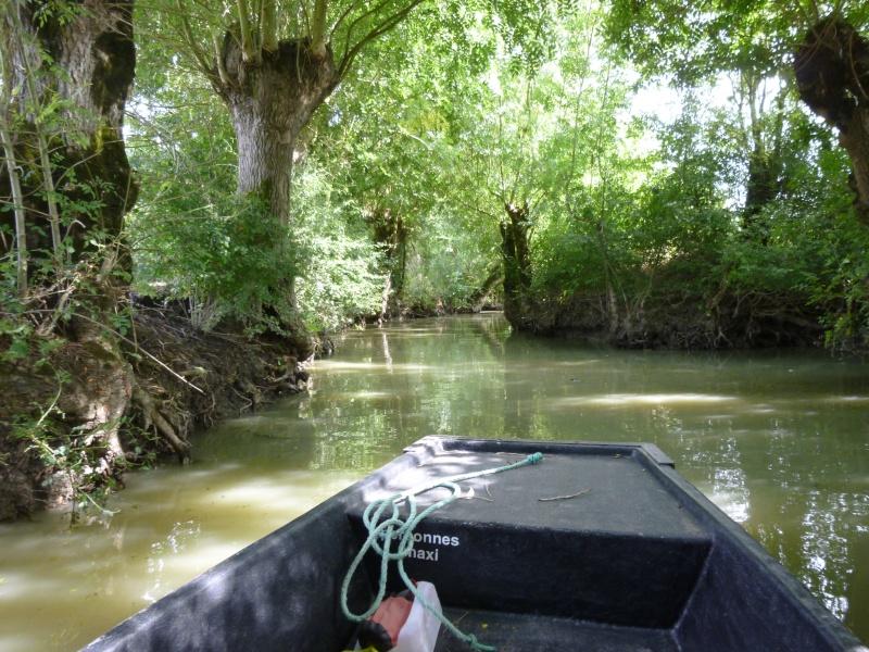 Mes vacances en Vendée - Septembre 2013 P1000311