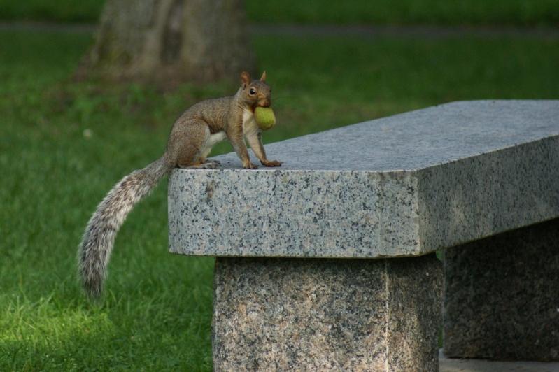 Écureuil et goûter!! Saint-16