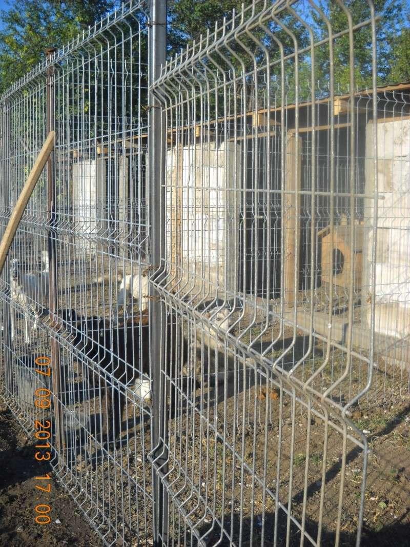 ALLEZ ON CONTINUE L'AVENTURE CONSTRUISONS LES DERNIERS  BOXES AU REFUGE DE LENUTA -  R - Page 3 Dscn6329