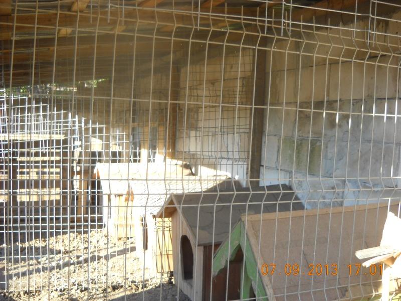 ALLEZ ON CONTINUE L'AVENTURE CONSTRUISONS LES DERNIERS  BOXES AU REFUGE DE LENUTA -  R - Page 3 Dscn6336