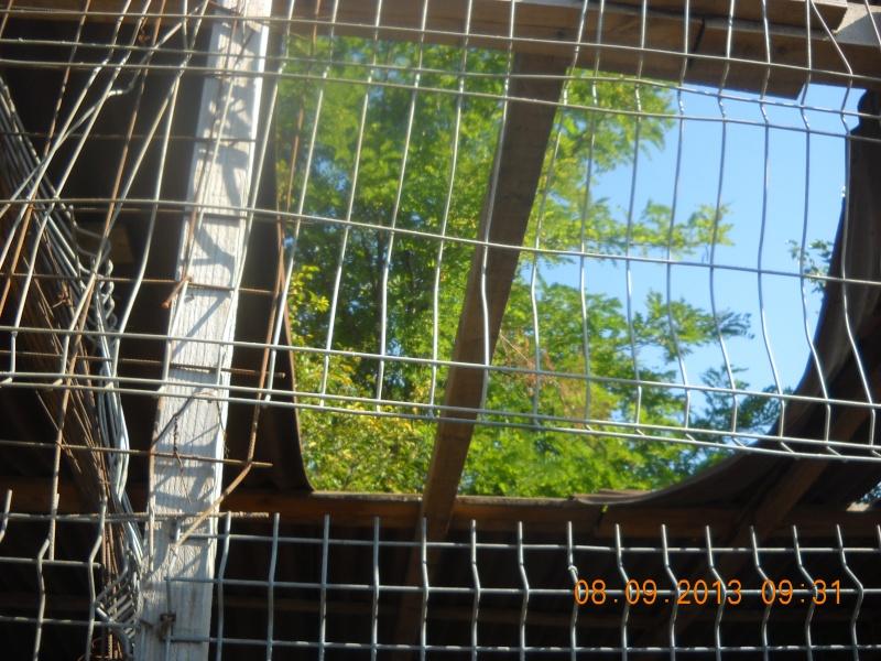 ALLEZ ON CONTINUE L'AVENTURE CONSTRUISONS LES DERNIERS  BOXES AU REFUGE DE LENUTA -  R - Page 3 Dscn6523
