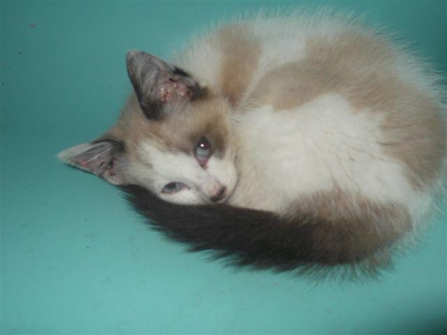 Photos des chats sauvés, avant/après - Page 2 2325_210