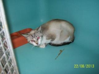 Photos des chats sauvés, avant/après - Page 2 62560910