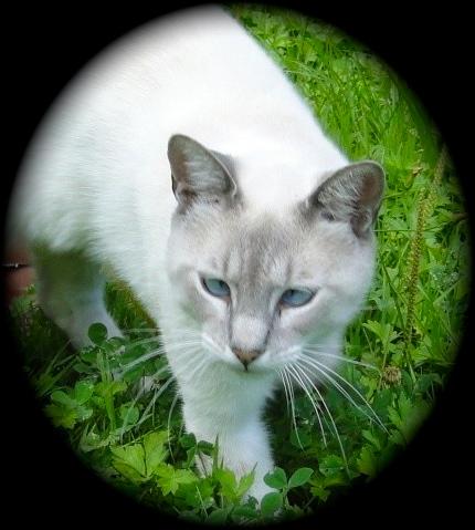 Les amis des chats libres Adopti10