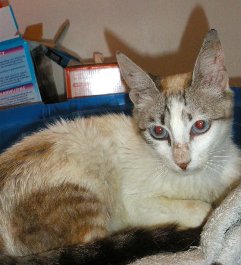 Photos des chats sauvés, avant/après - Page 2 X_005111