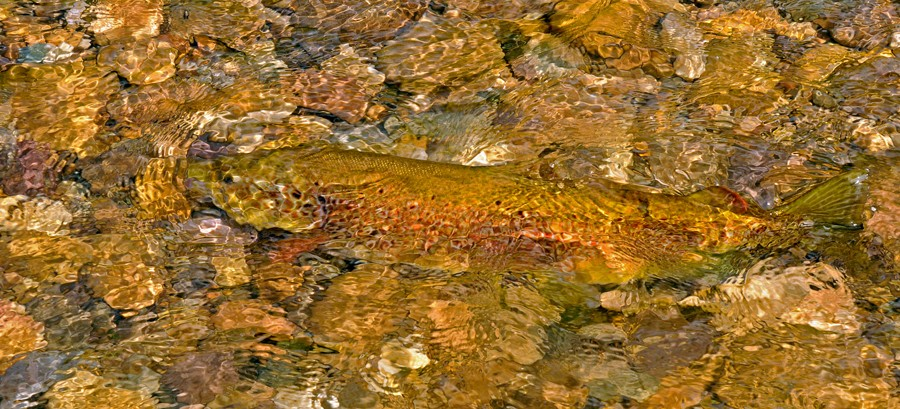 Fly fishing in province Leon, Spain - Page 3 Camufl10