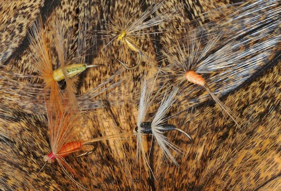 Fly fishing in province Leon, Spain - Page 3 Wet_fl10