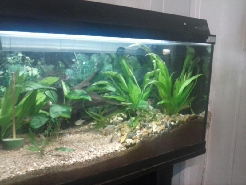 tube néon aquarium 100 l Cam00012