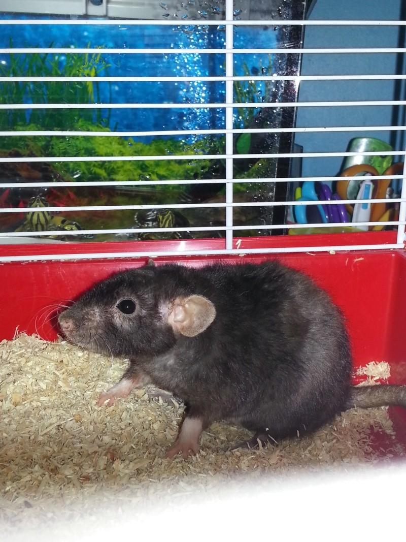 Mes rattes sont agressif que faire ? Img_2010