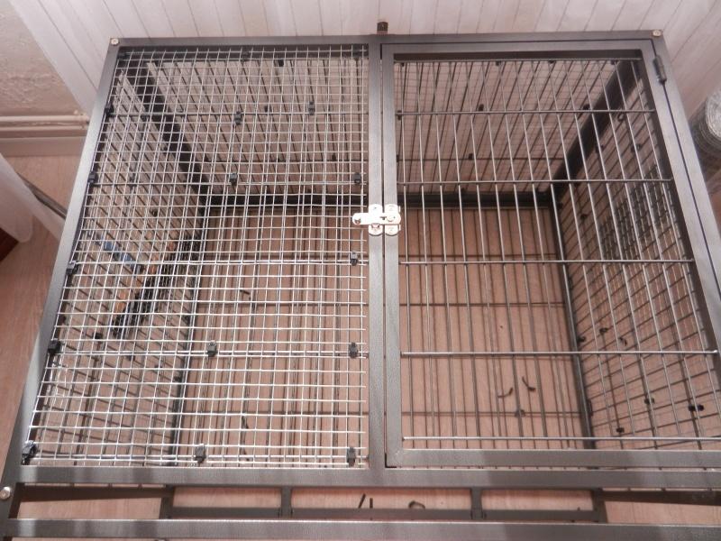 La cage tabby 1 Dscn1118