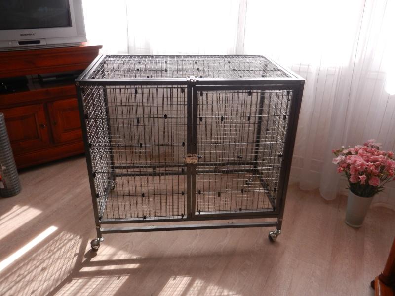 La cage tabby 1 Dscn1119