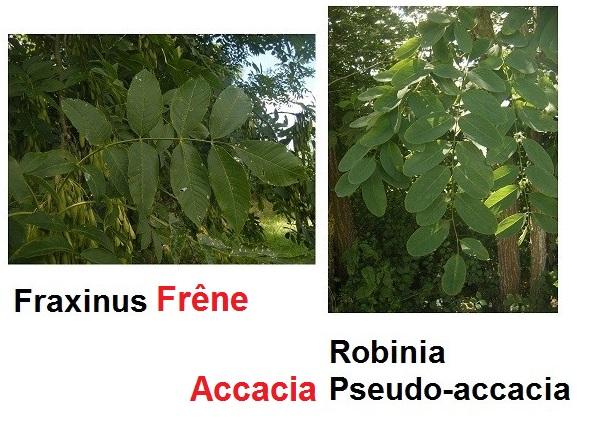 [Plantes] Reconnaitre les toxiques et mortelles Dscf4310