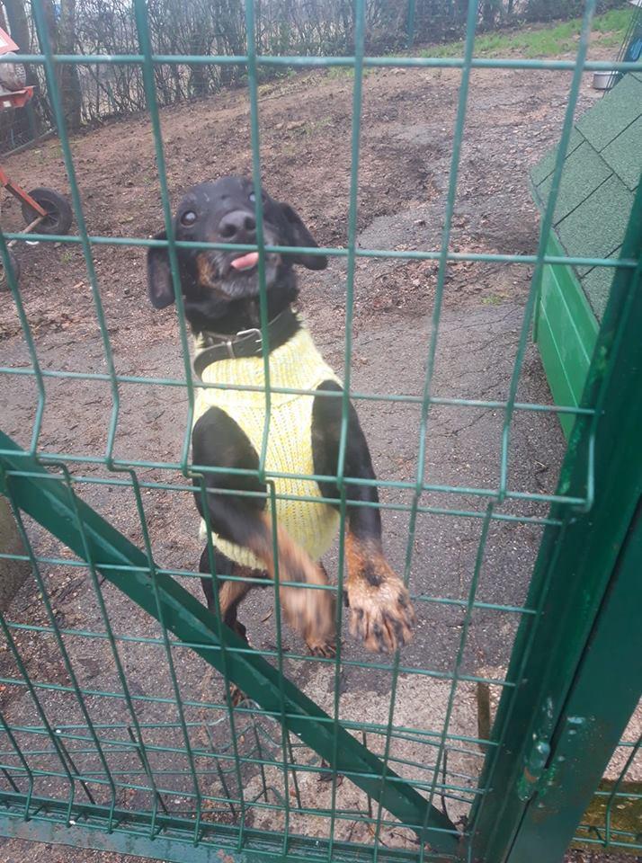 Re: DINO, x jagd terrier 11 ans -  Spa de la Region Creusotine à Marmagne (71)   53825910