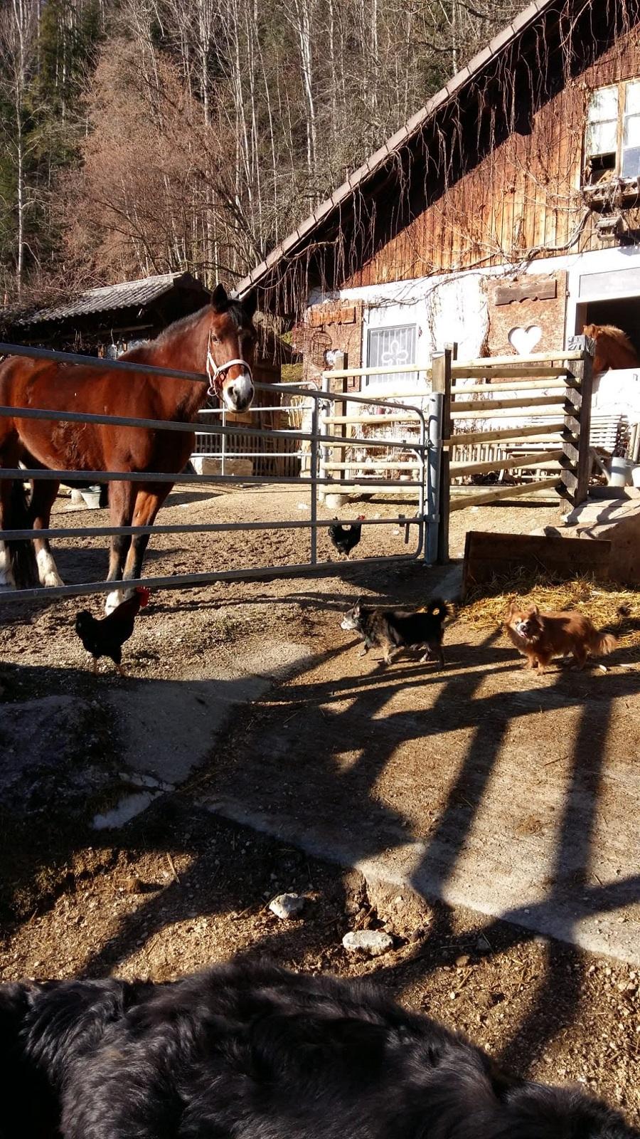 ELLIOT et CARAMEL - x chihuahua/papillon 9 et 11 ans - Asso Animale Attitude 63 - adoptés par Françoise, filleuls de frimousse Img-2012
