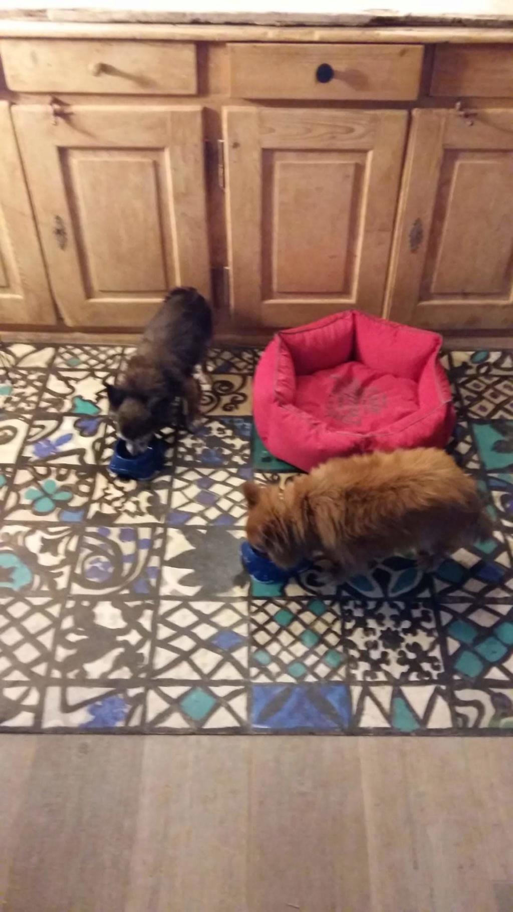 ELLIOT et CARAMEL - x chihuahua/papillon 9 et 11 ans - Asso Animale Attitude 63 - adoptés par Françoise, filleuls de frimousse Img-2014