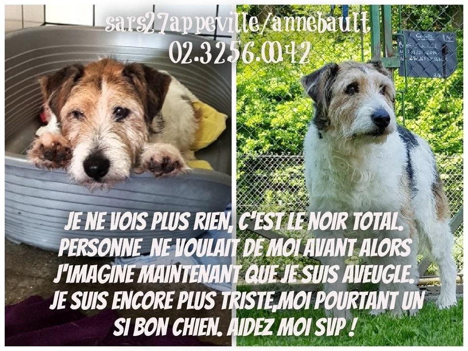PATt - fox terrier 12 ans - (aveugle) Refuge de l'Esperance à Appeville Annebault (27) Pat2710