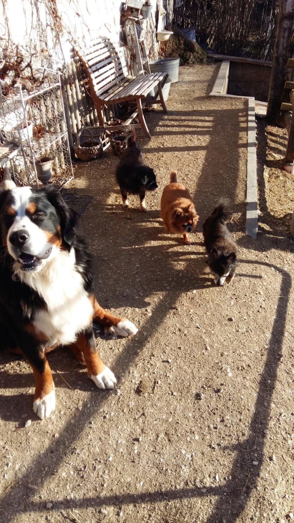 ELLIOT et CARAMEL - x chihuahua/papillon 9 et 11 ans - Asso Animale Attitude 63 - adoptés par Françoise, filleuls de frimousse Photo_12