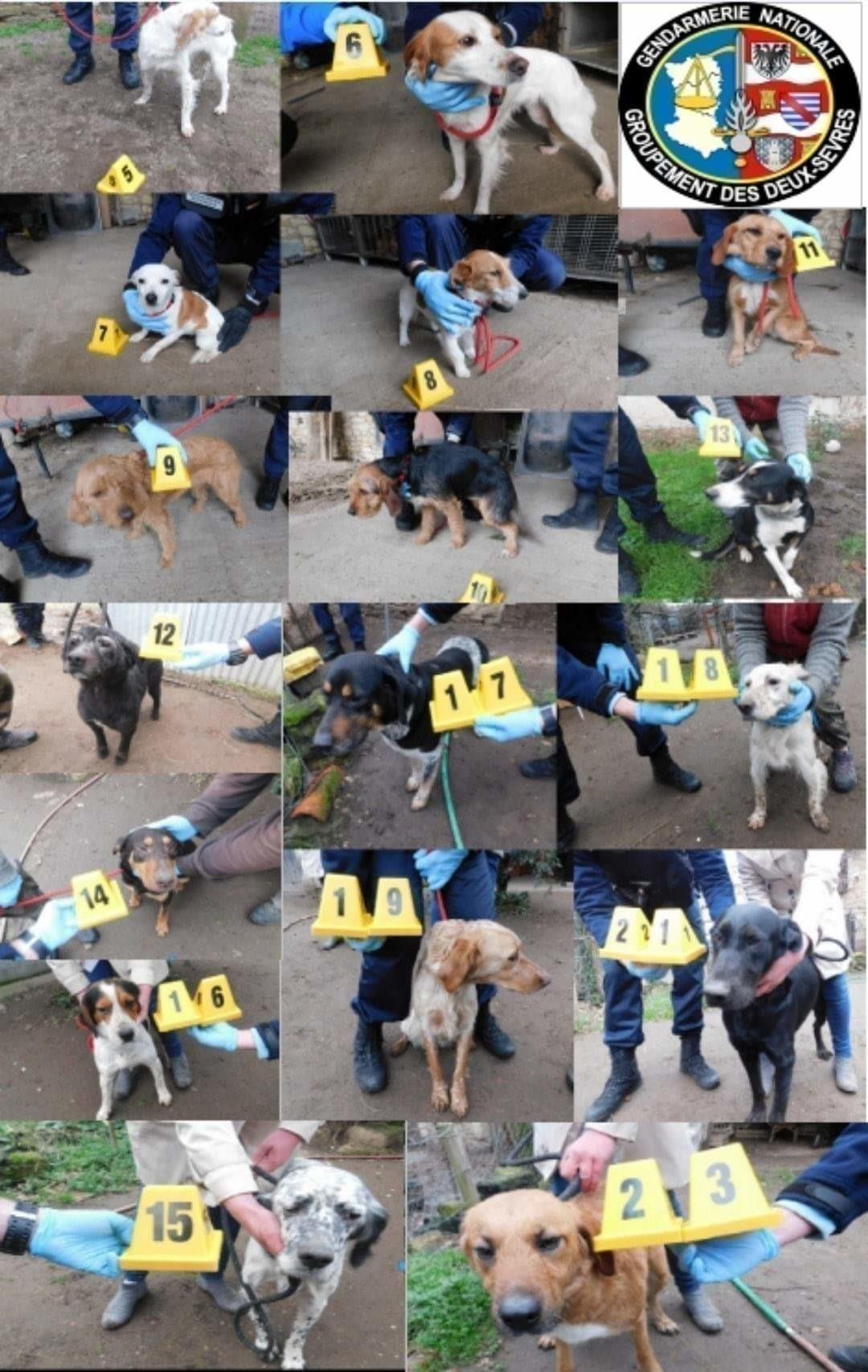 La gendarmerie recherche les propriétaires de chiens volés Recher10
