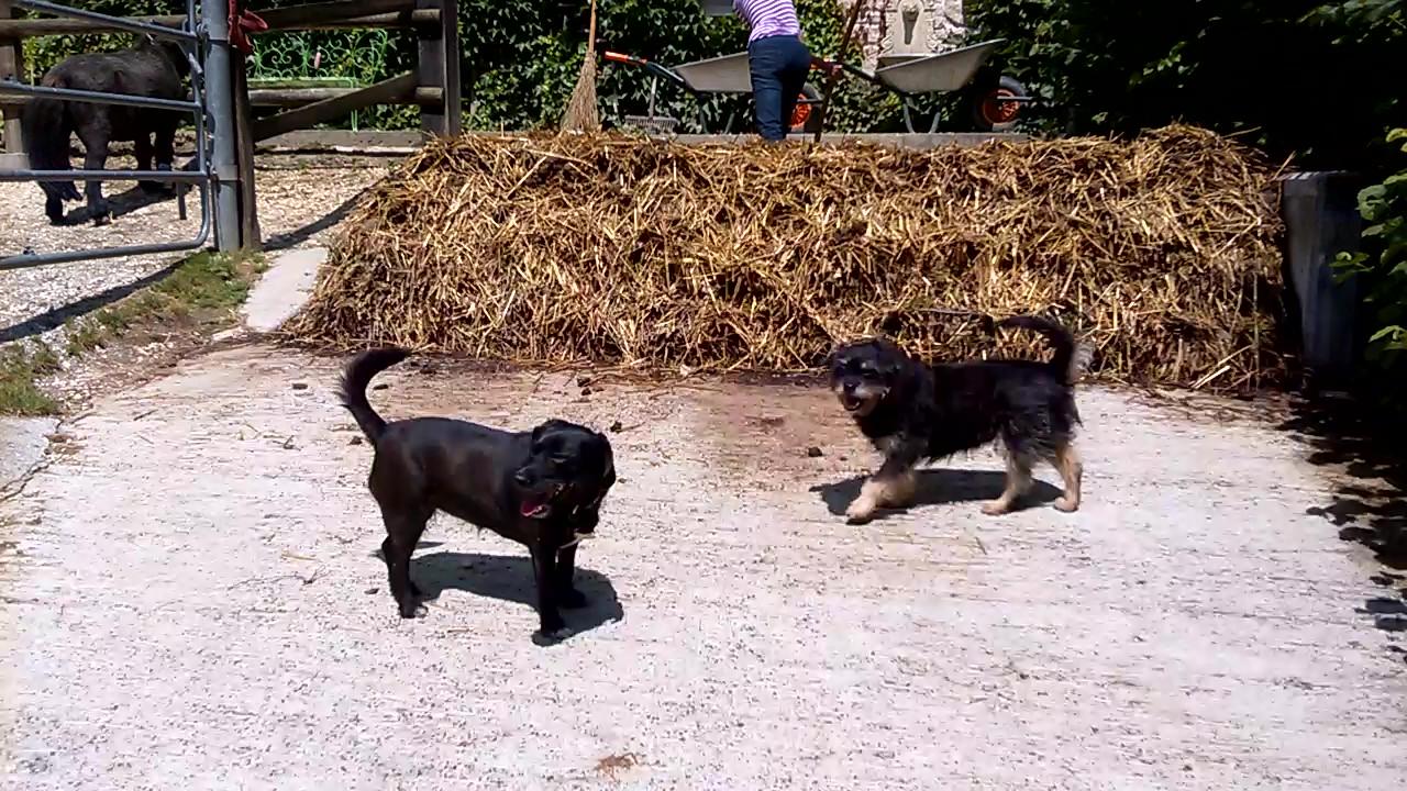 PAMS (BRAHMS) -  x griffon 12 ans - Asso  Reve de Tina - adopté par Françoise (filleul de frimousse) Wp_20110