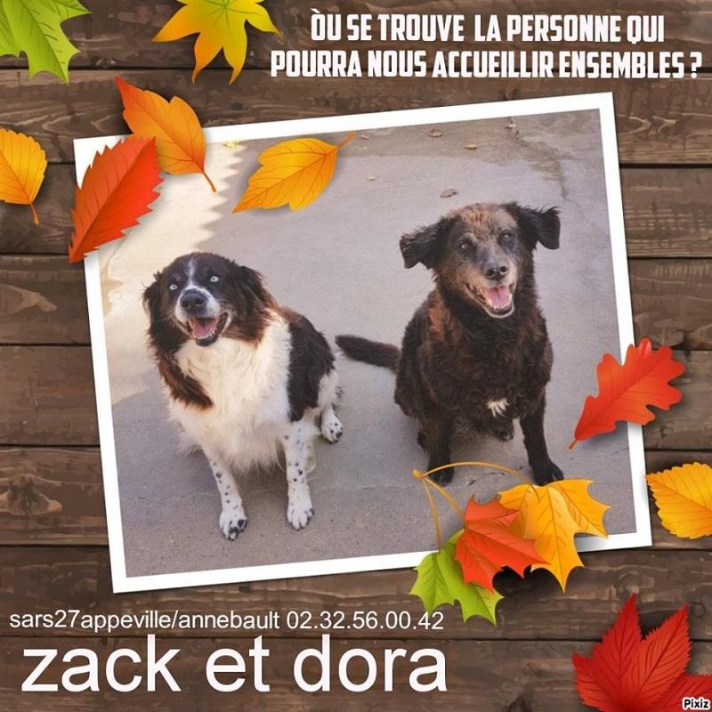 ZACK, x springer ? 9 ans et DORA x berger ? 13 ans - Refuge de l'Esperance à Appeville Annebault (27) Zack-d10