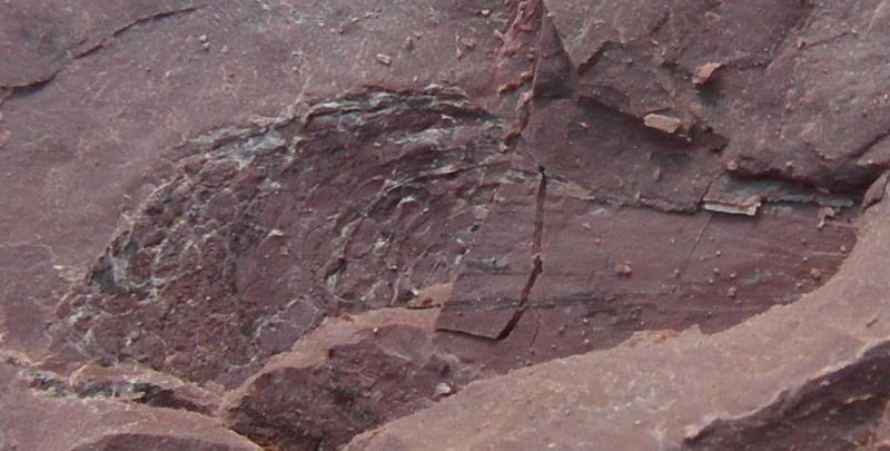 carbonifere Sam_1710