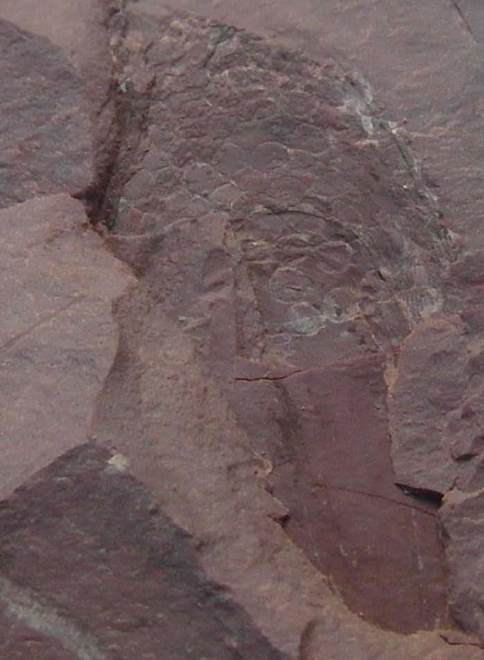 carbonifere Sam_1711