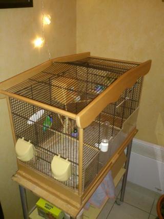 nouveaux pensionnaires à plumes chez moi !!! Cage_111