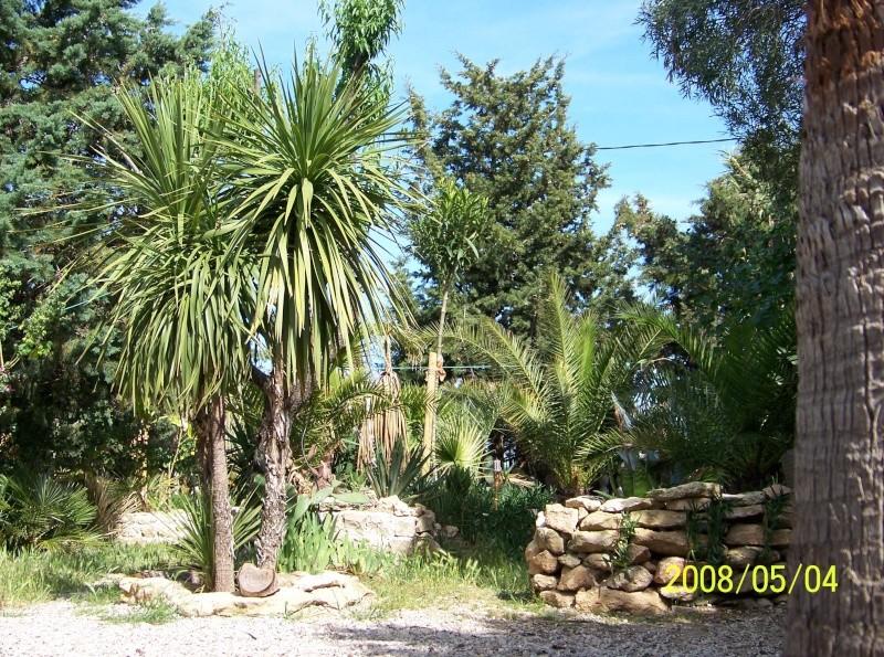 quelques photos anciennes de mon jardin avant l'invasion des pictus 100_1210
