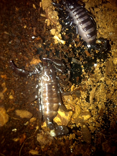 Baby emp claw dragging and leg twisted over it Image-10