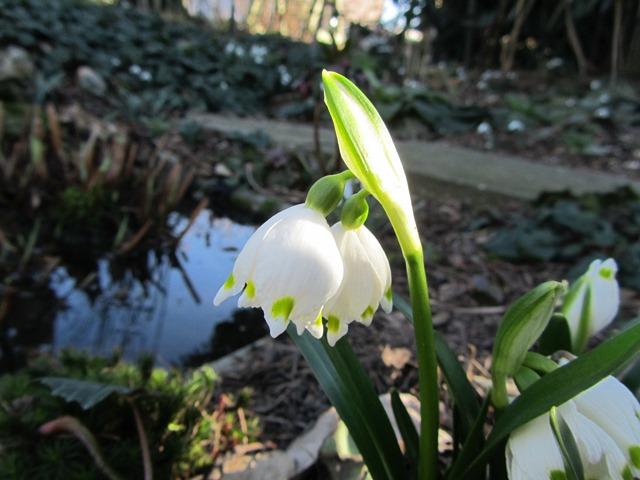 Erste Frühlingsboten im Garten und in Wald und Flur - Seite 2 Img_7319